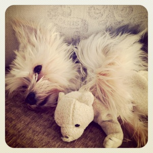 She loves her teddy...