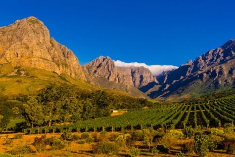Oldenburg Vineyards, Banghoek Valley, Stellenbosch, Cape Winelands, South Africa.